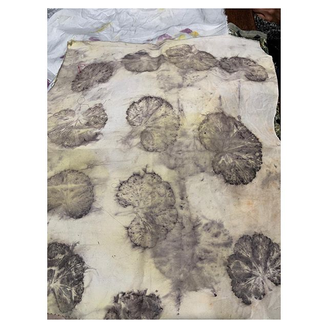 Eucalyptus leaf prints on silk 😵