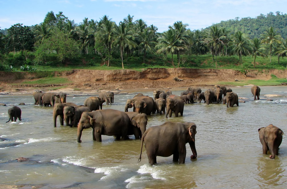 Pinnawala-Elephant-Orphanage.jpg