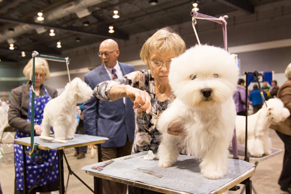 Rose_City_Dog_Show_2014-88.jpg