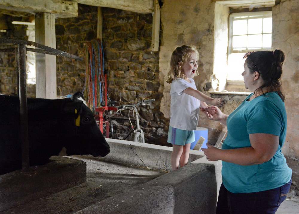Jodi Gauker of Fleetwood looks on as her daughter Callie, 2 1/2, smiles and laughs at the cows at the Gauker Family Farm in Fleetwood.