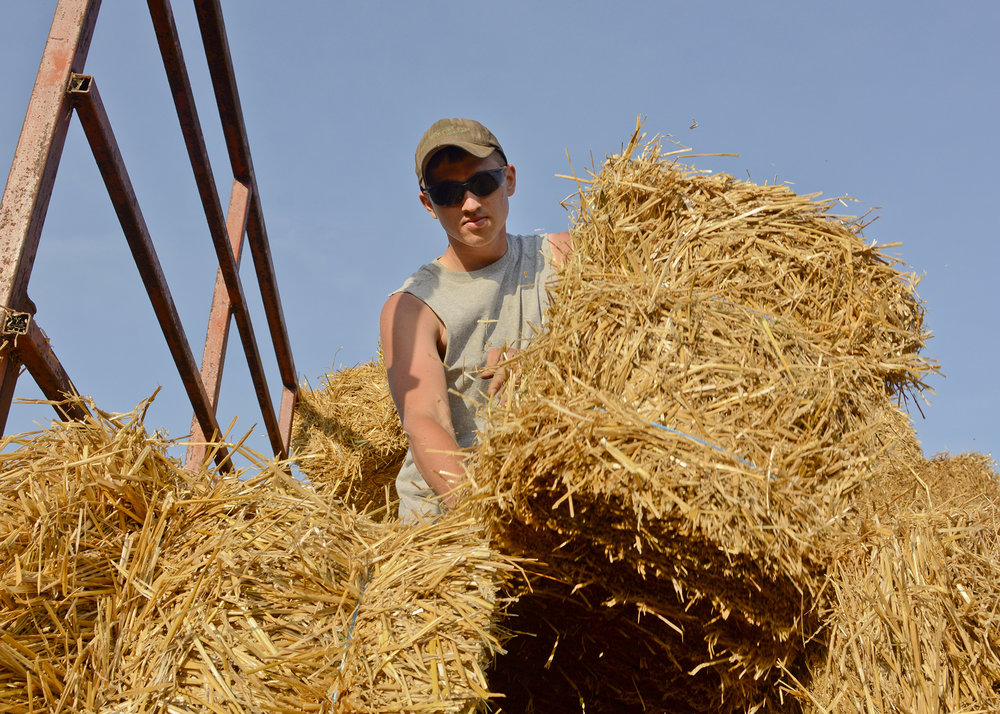 Sam Angstadt small bales at one of their properties in Kutztown on July 10, 2017. Angstadt graduated last year from Fleetwood High School.
