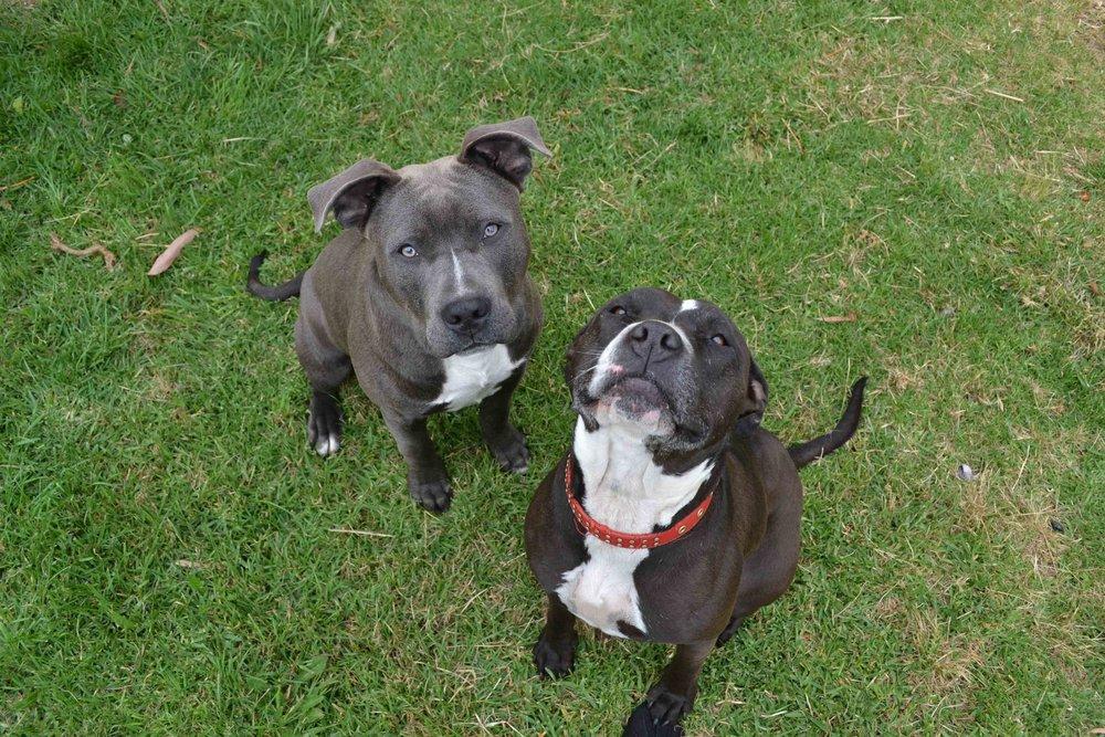 Sully (Left) & Jetta (Right)