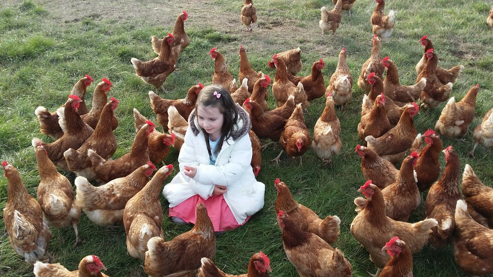 Bella_With_Hens.jpg