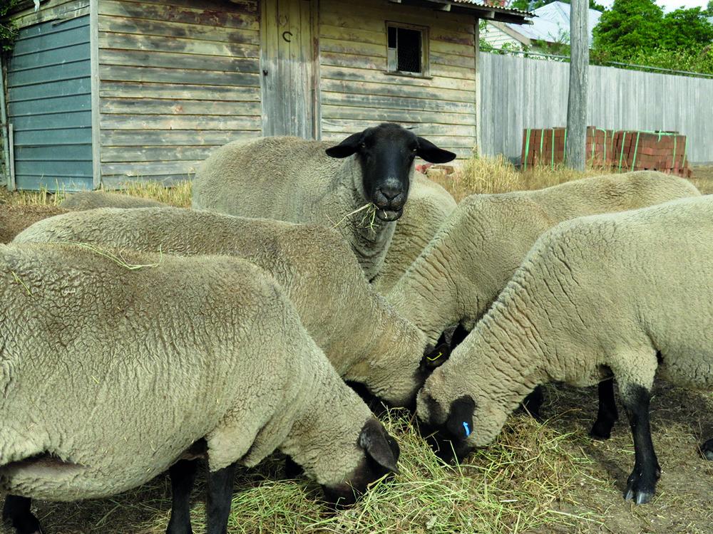 Plumfield Farm 34442896_Unknown.JPG