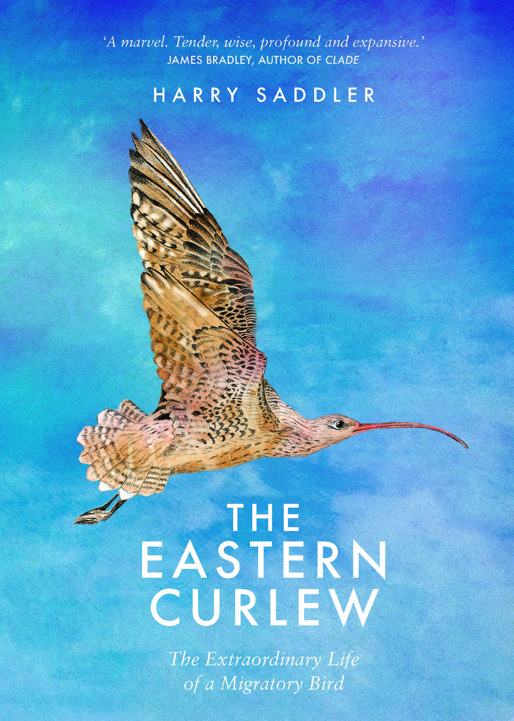 The Eastern Curlew.jpg