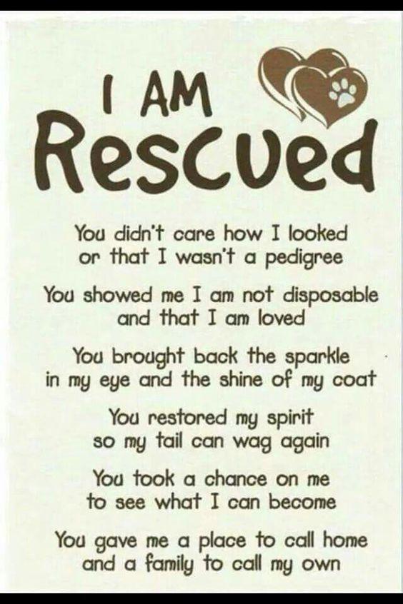 Emily S Legacy Rescue