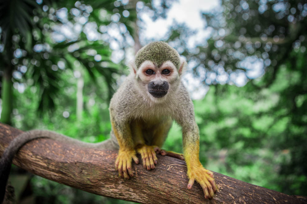 Dominican Republic Monkey Jungle by Atif Ateeq-2