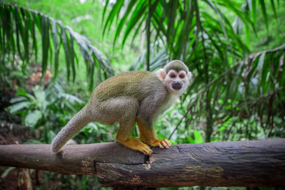 Dominican Republic Monkey Jungle by Atif Ateeq-8