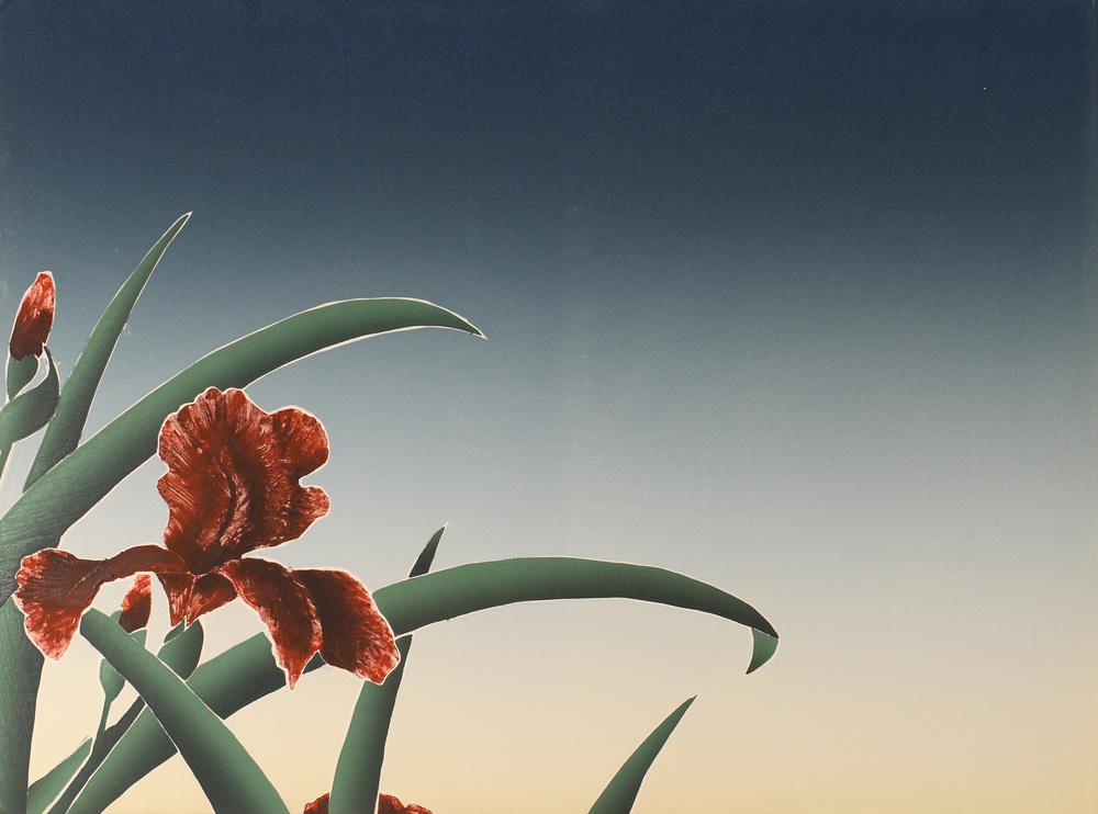 Iris at Daybreak-30X22.jpg