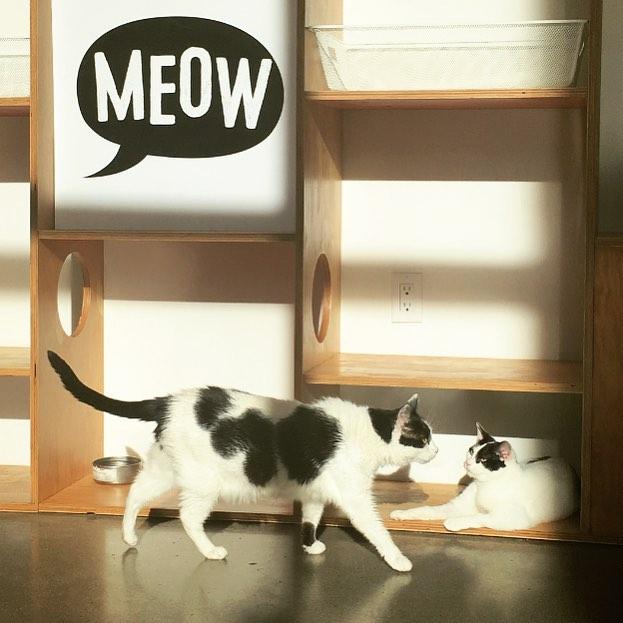 meetthecats.jpg