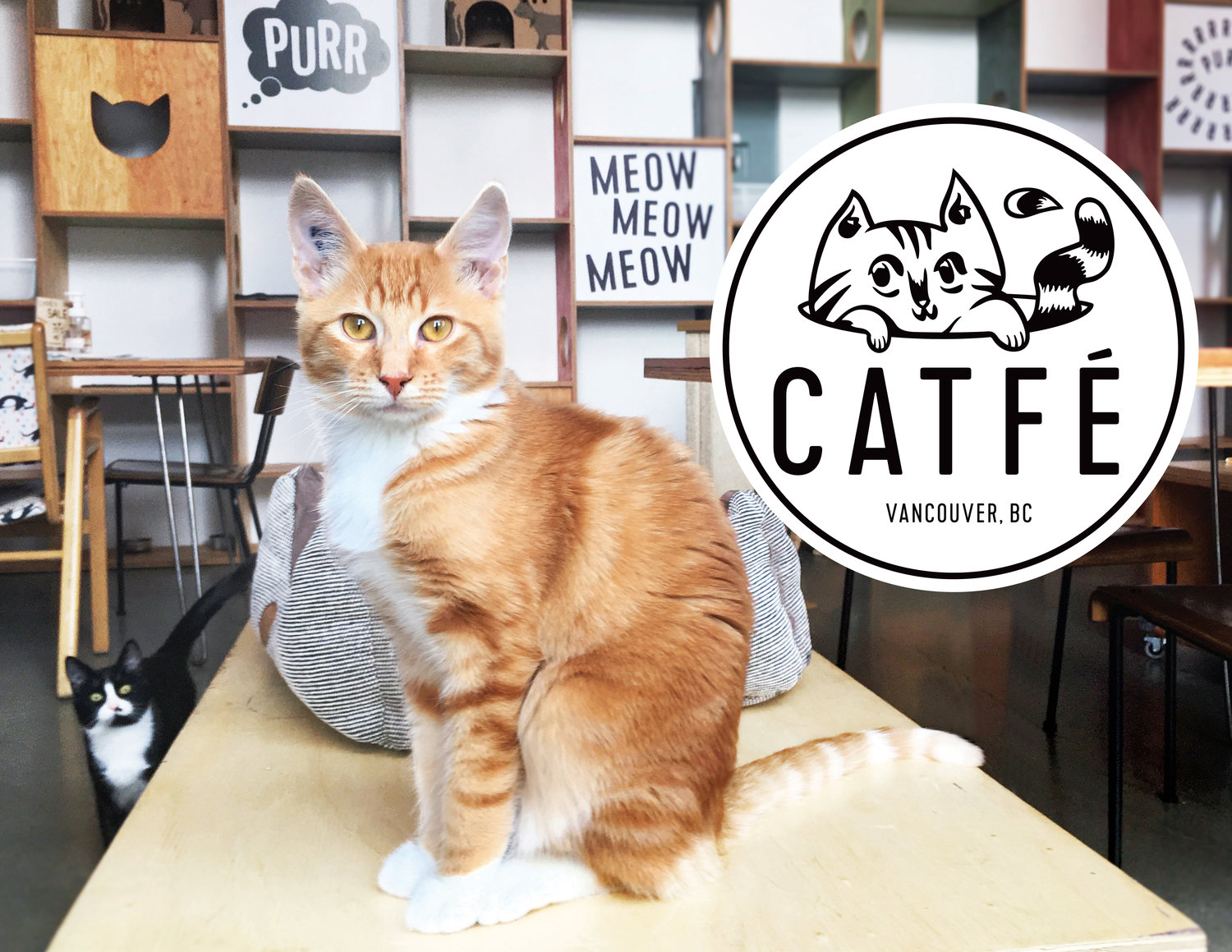 Speed dating cat cafe