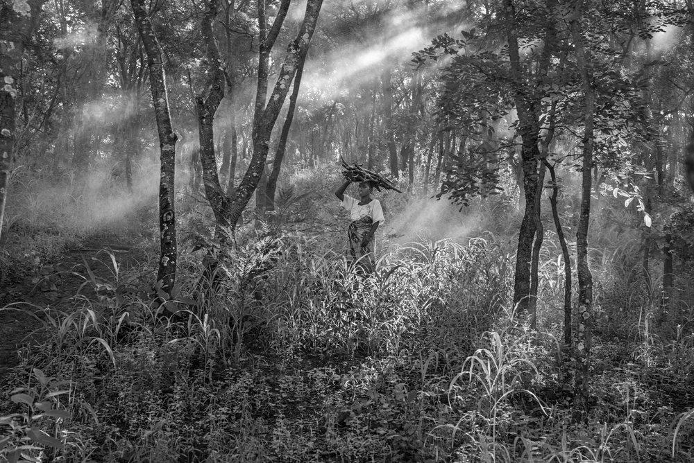 Firewood, Tanzania 2015