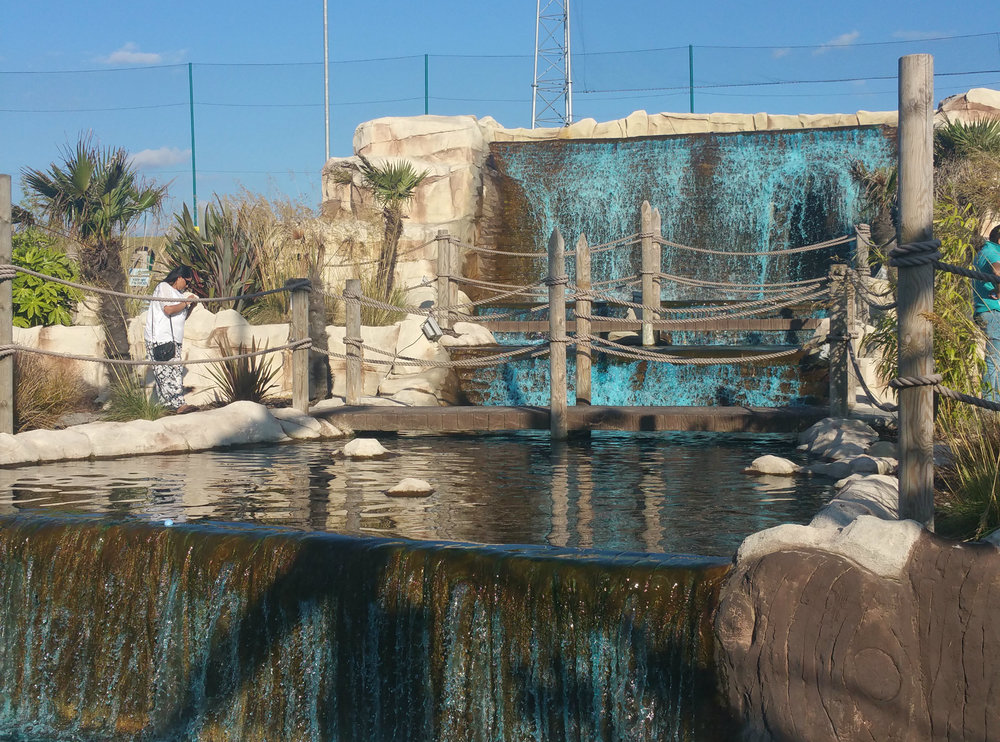 moby dick crazy golf