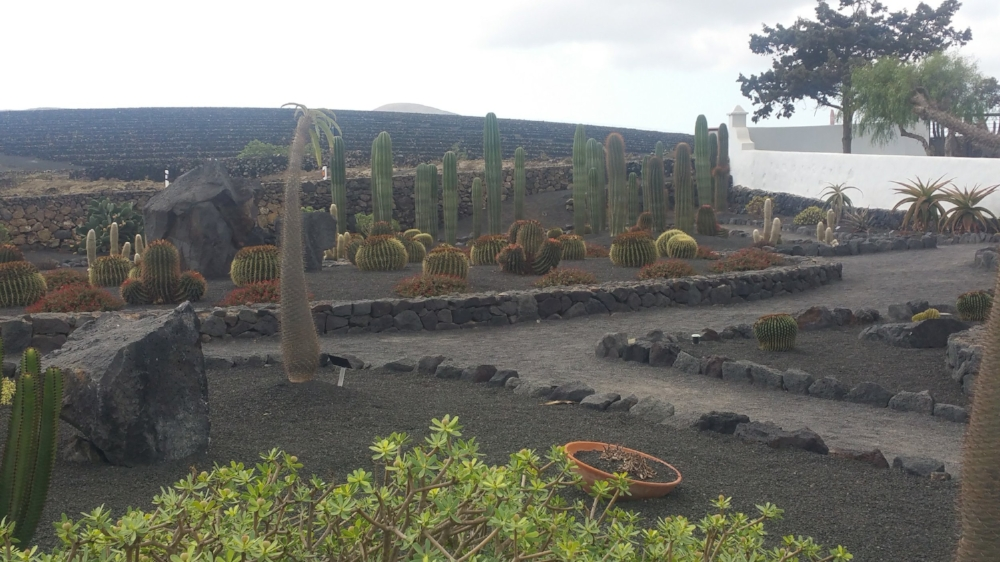 wine tour lanzarote
