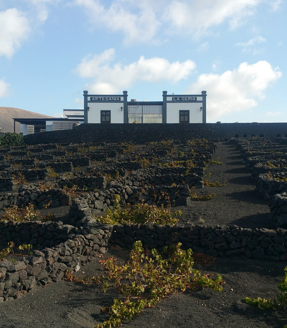 vineyard tour lanzarote
