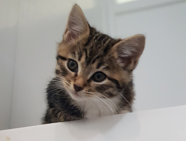 kittens at rspca