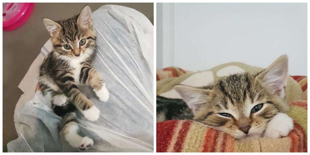 adopting kittens.jpg
