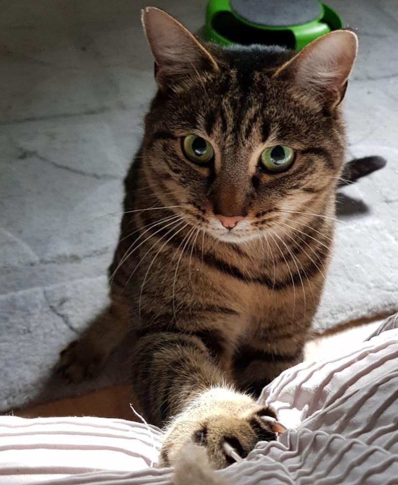 feline friends.JPG