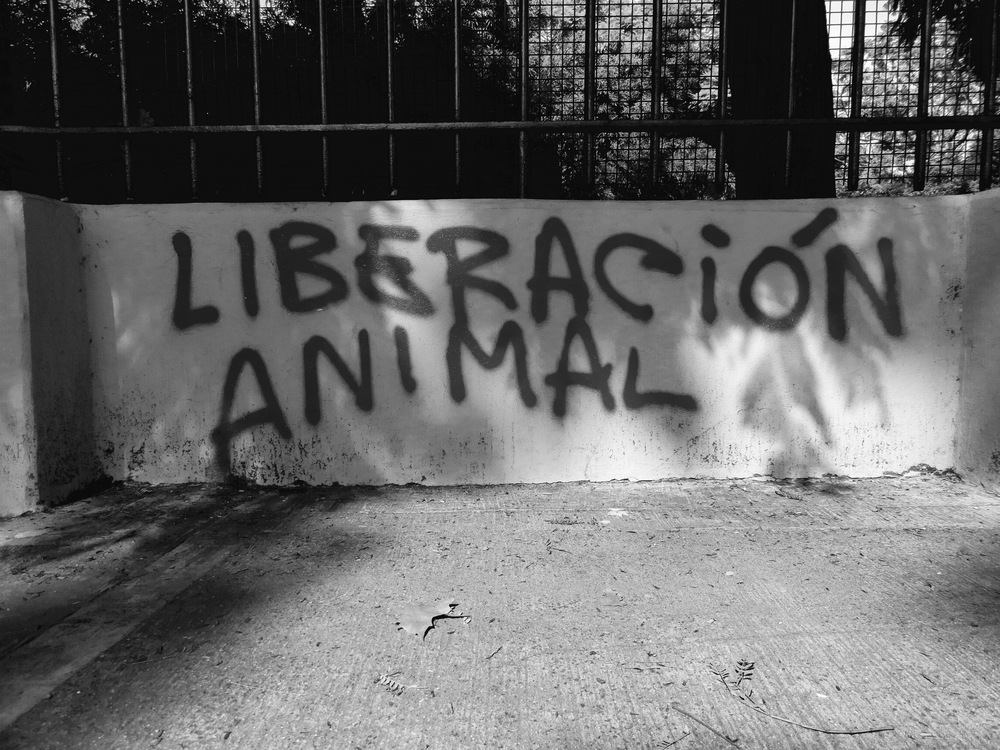 Graffiti on the walls of a zoo in Buenos Aires, Argentina.