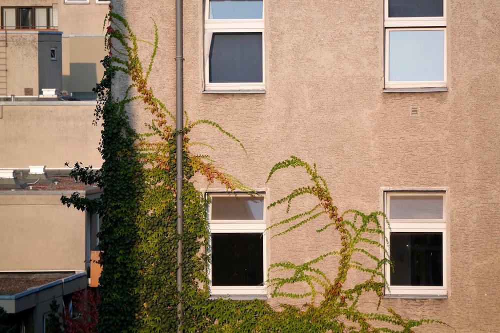 Vines reclaiming a building in Berlin, Germany.