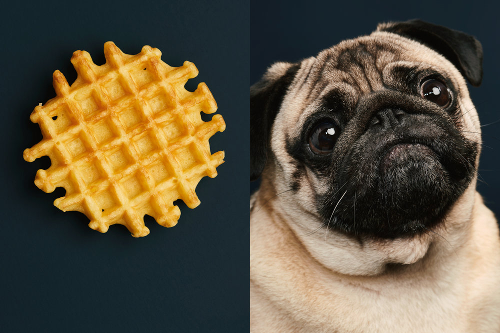 "Dog Calendar 2018/The Gourmand    ""A Dog Called Waffle""    Jess Bonham"