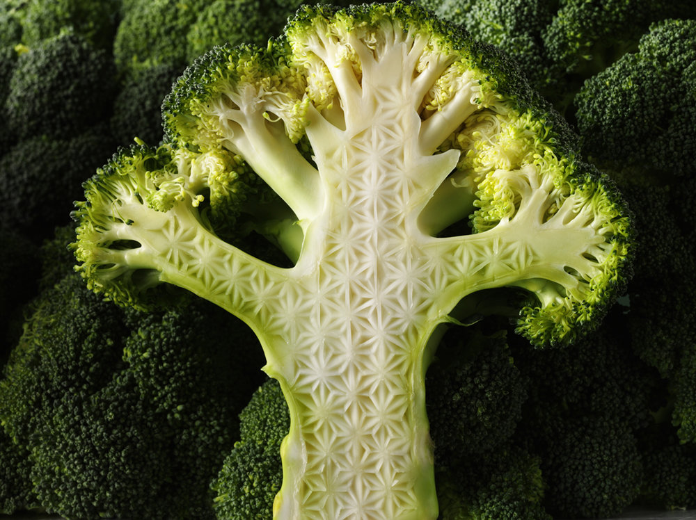 © hilary moore    personal project- broccoli