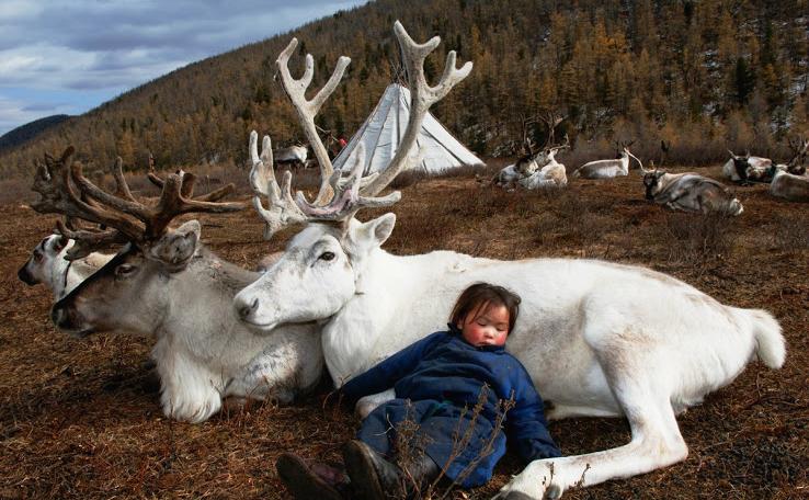 MONGOLIAN NOMAD BOY.   H AMID  S ARDAR