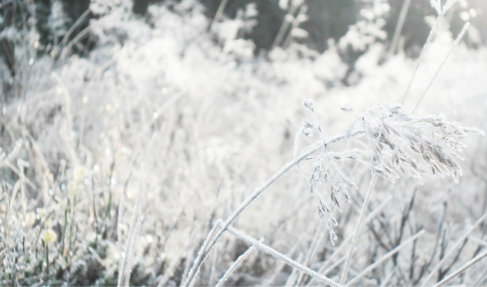o15  Frost, Sandvadet.