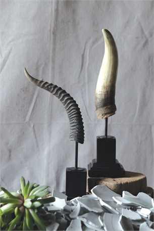 Resin Horn w Metal Stand.jpg