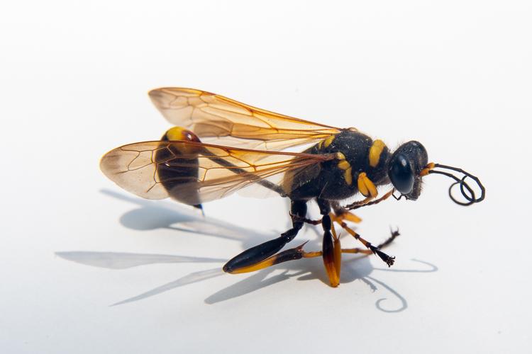 wasp mag.jpg