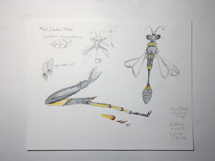 wasp sketch 1 b.jpg