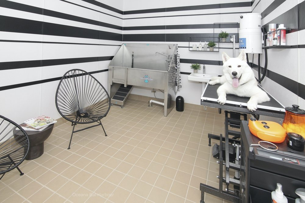 oceana pet room miami beach 1.JPG