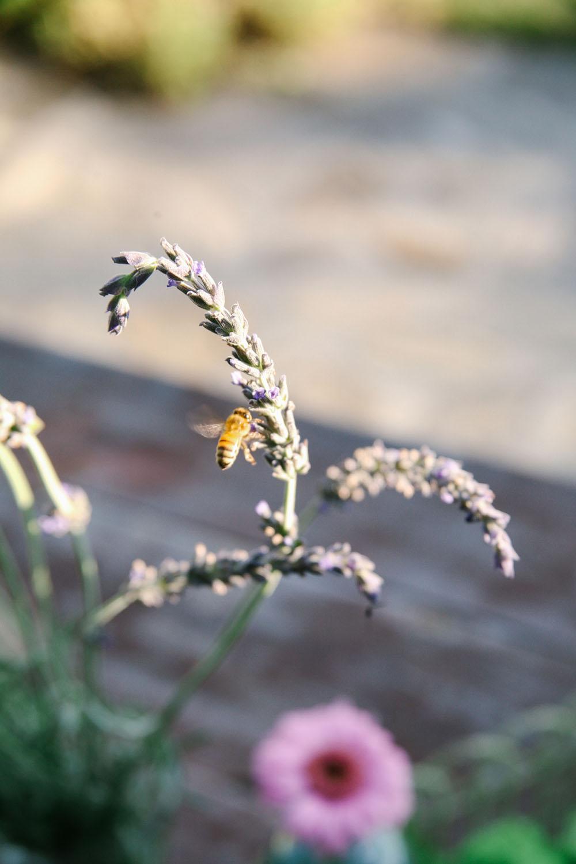 honeybee | jessie webster