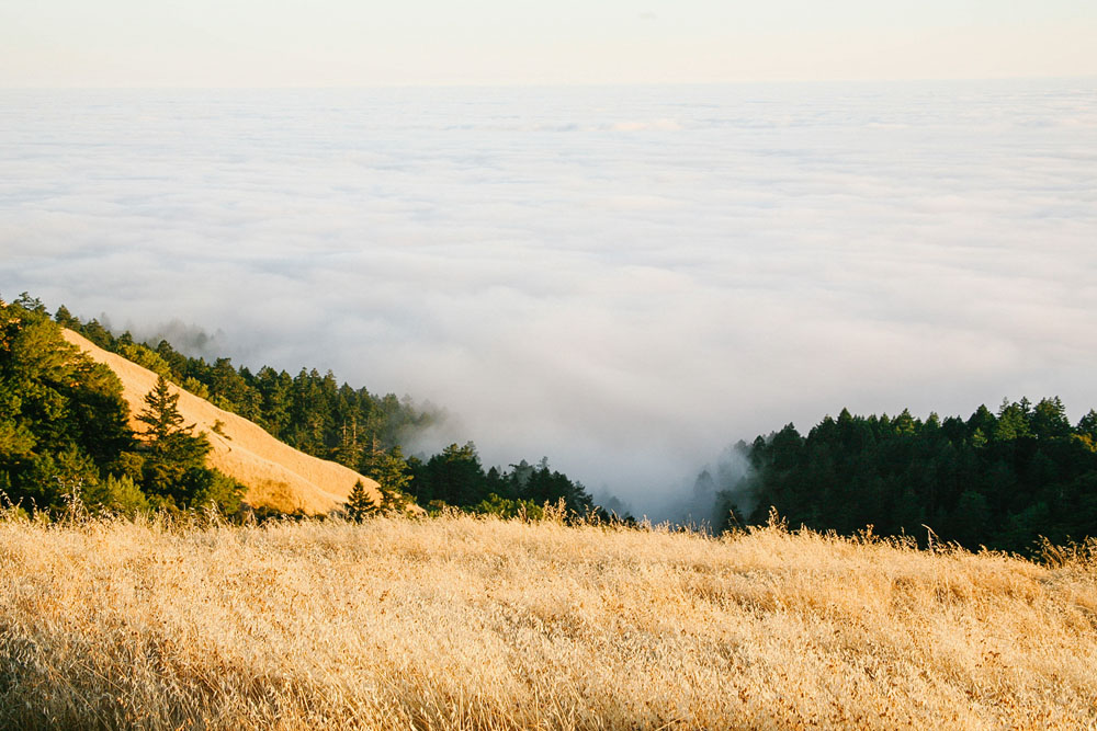 mount tam | jessie webster