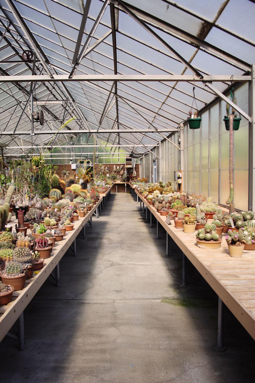 huntington botanical garden | jessie webster