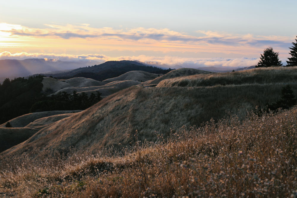 marin county | jessie webster