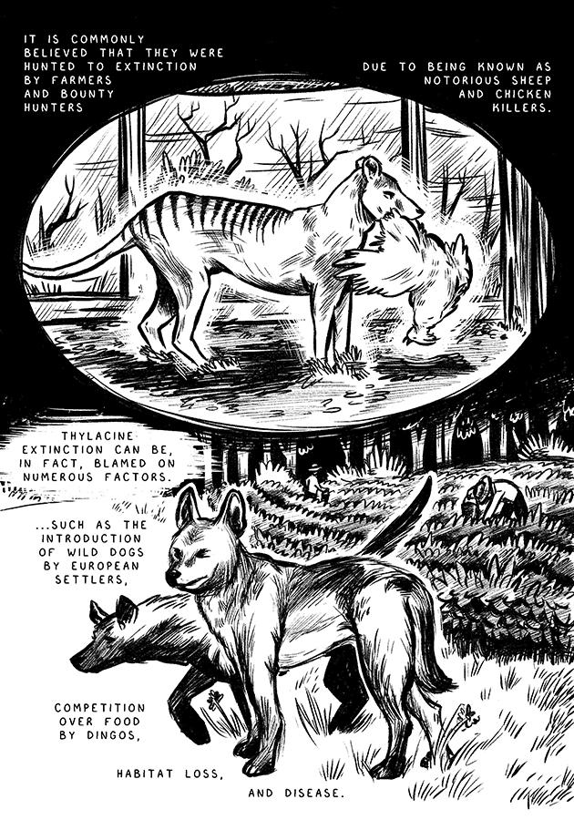thylacine2.jpg