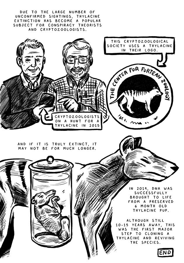 thylacine6.jpg