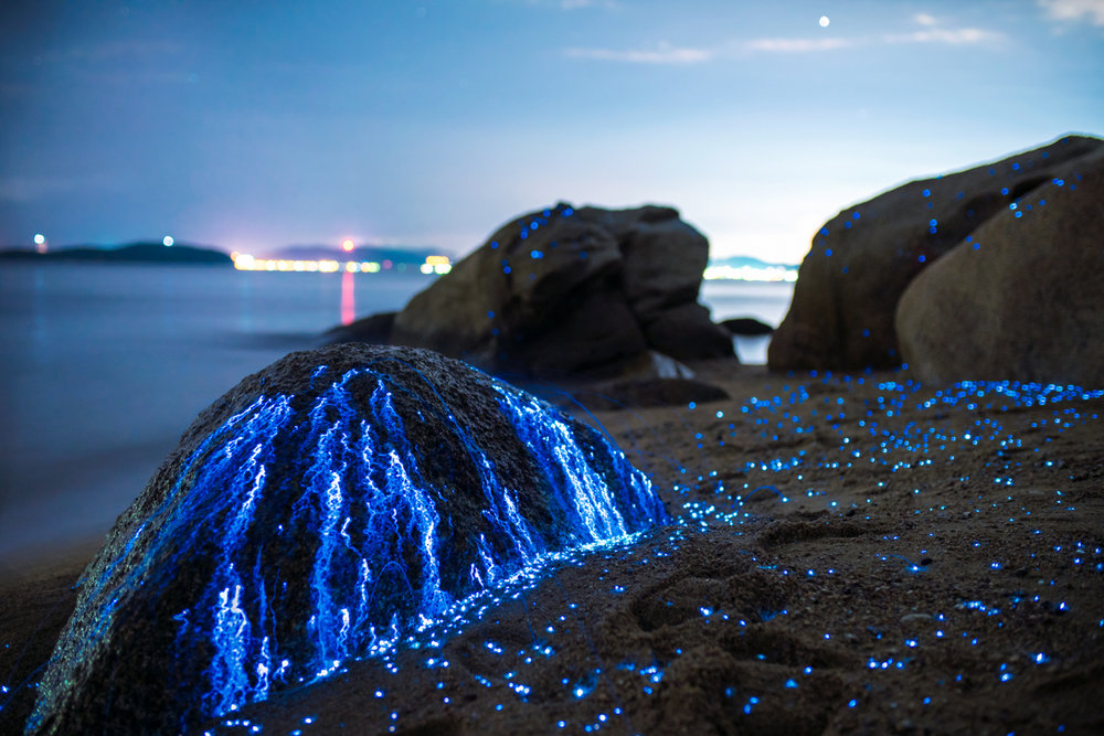 Photographers capture images of bioluminescent sea fireflies in Japan - Lonely Planet Travel News. Article by James Gabriel Martin. Photographs by Tdub