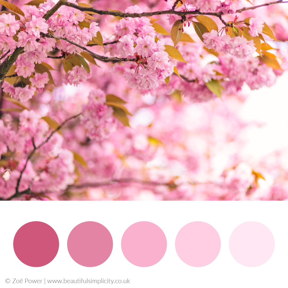 Cherry blossom cool pink colour palette
