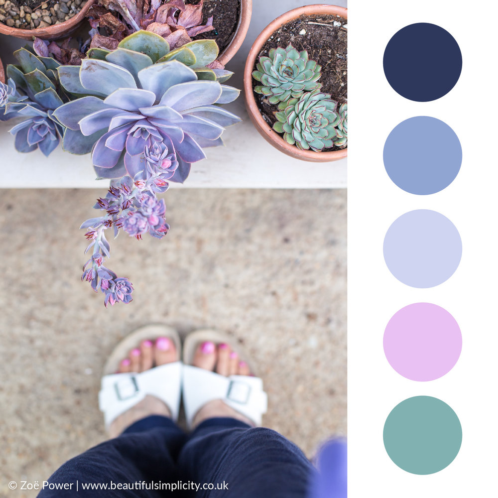 Echeveria blue grey colour palette | Monk's House, East Sussex, UK