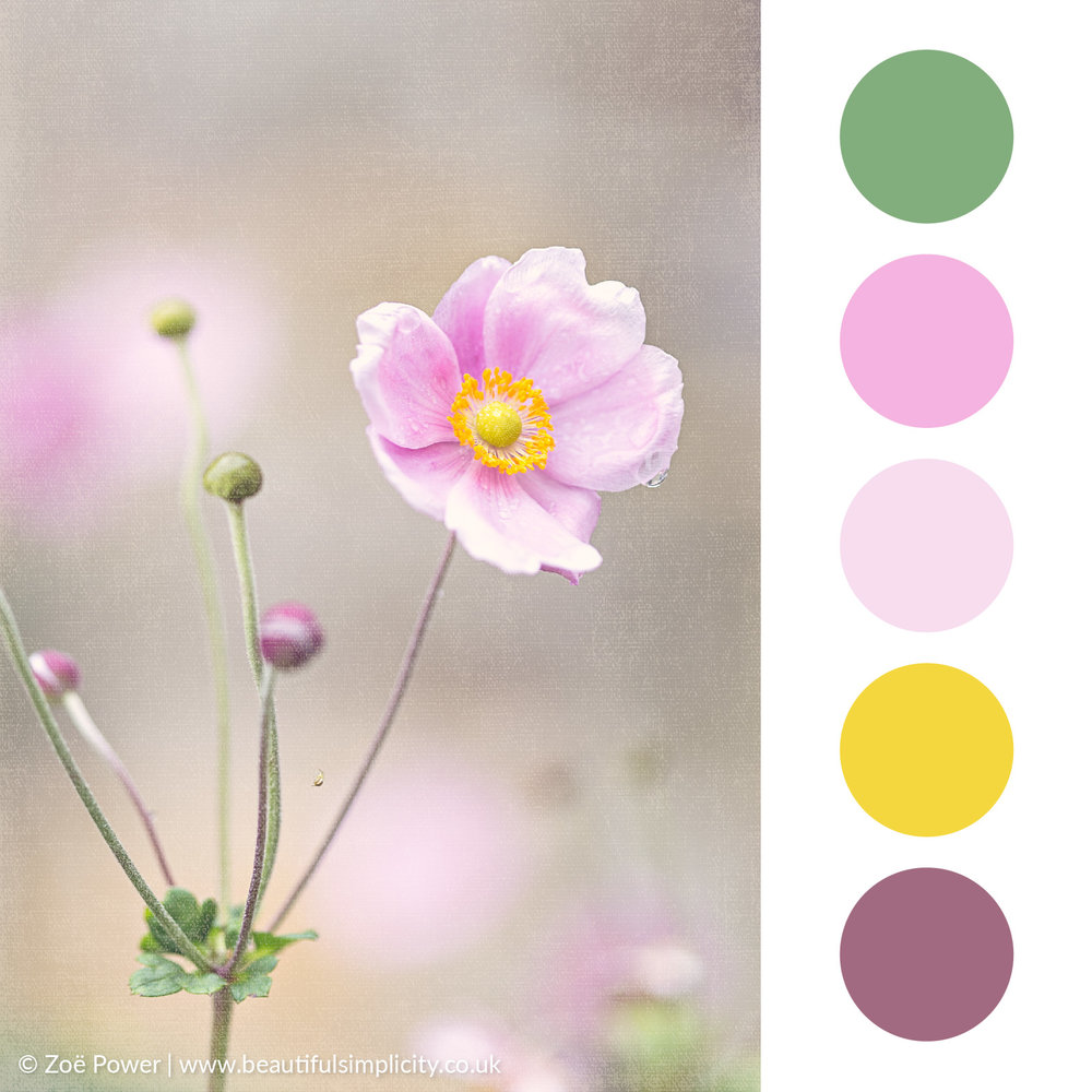 Japanese Anenome pink colour palette