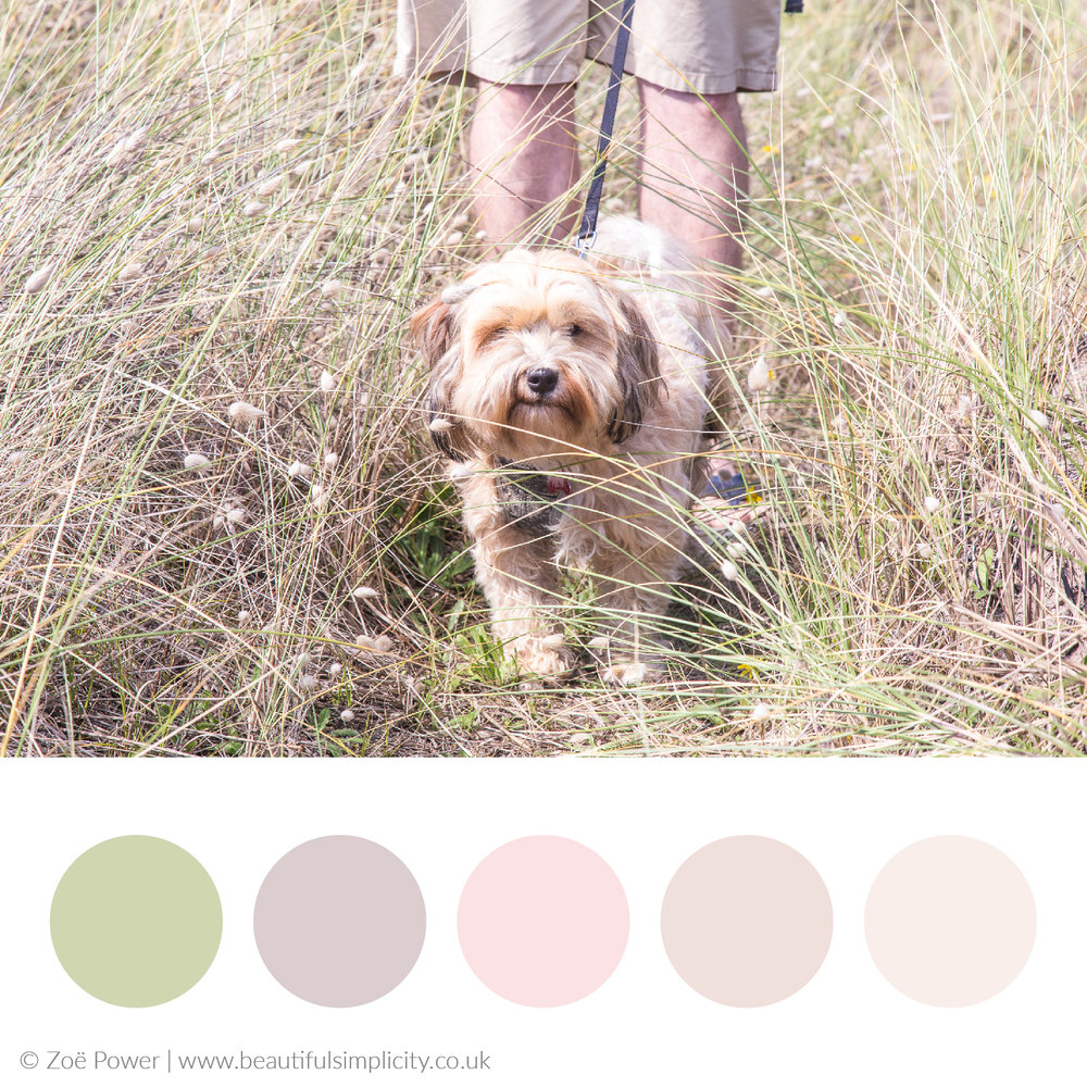 Sand dune neutrals colour palette