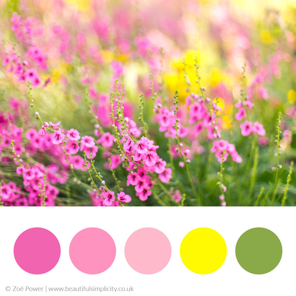 Warm summer pinks colour palette | University of Oxford Botanic Garden, UK
