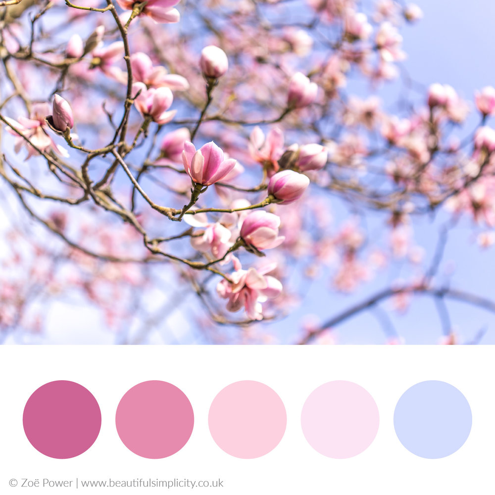 Dusky cool pinks colour palette | Magnolia filled skies, Nymans garden, West Sussex, UK