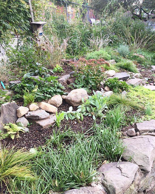 Shout out to our amazing member @nnejad55 !! She took the lead of the project by the end of last season an put so much hard work during this season to make this area of the garden beautiful and abundant. #urbangardening #gardener #rockgarden #communitygarden #community