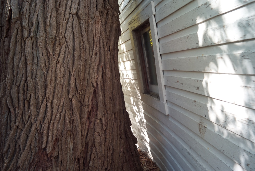 Living with the giants. Above:  An older, wooden garage gives way to mature bur oak.