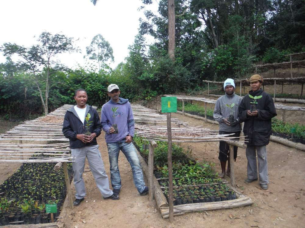 Growing native tree species to reforest one of the world's most biodiverse amphibian zones in the world. In time, we want the local people to sell native planting stock to mining companies that currently buy trees from other countries for their restoration programs