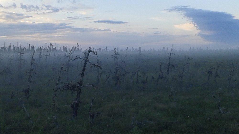 Evening fog settling on Larch bog, James Bay lowlands