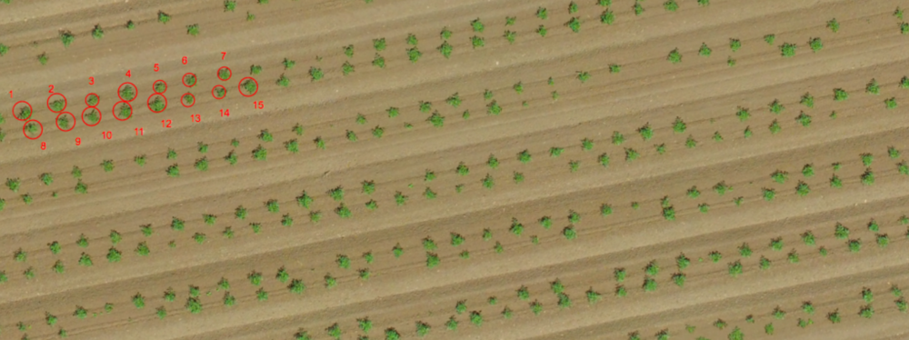 DronesAgriculture_Birdseyeofbigsky
